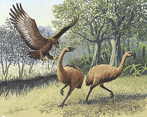 Artists rendition of a Haast's eagle attacking a moa. By John Megahan. Distributed under CC-BY license, PLOS Biology