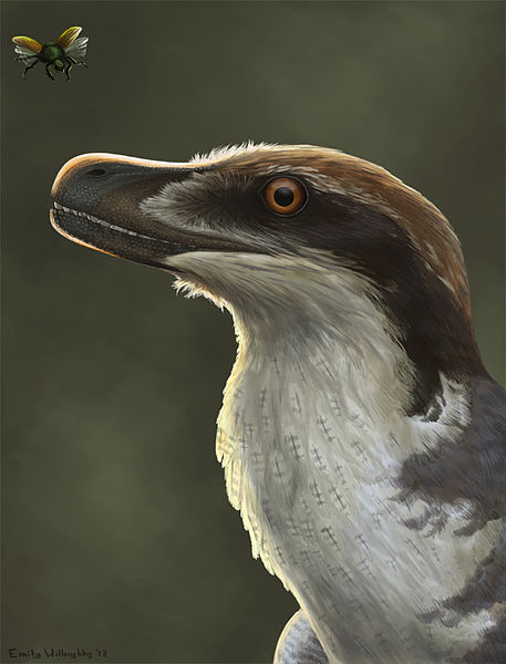 Acheroraptor, by Emily Willoughby. CC-BY, via Wikimedia Commons.