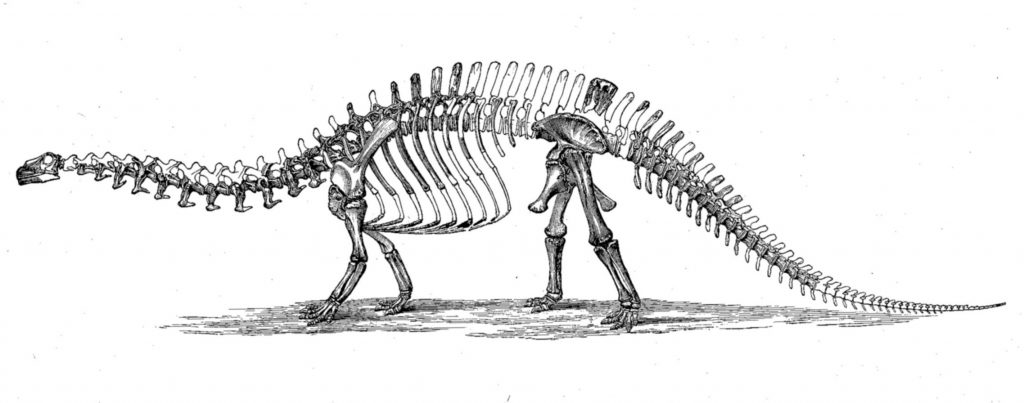 An old school Brontosaurus, as envisioned in the late 1800s. After Marsh 1896.