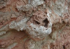 """A 25 million-year-old termite nest with the remains of a """"fungus garden"""" preserved inside. Credit: H. Hilbert-Worf, James Cook University."""