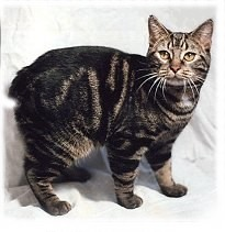 This is either a cheap tactic to increase blog traffic via cats, or an oddly relevant image. The Manx cat has a mutation that results in a shortened tail.