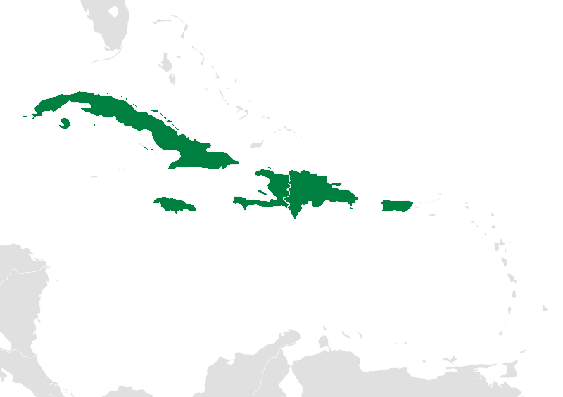 Map of the Greater Antilles in green. Other Caribbean islands like the Bahamas and Turks and Caicos have had mammalian extinctions Wikimedia Commons