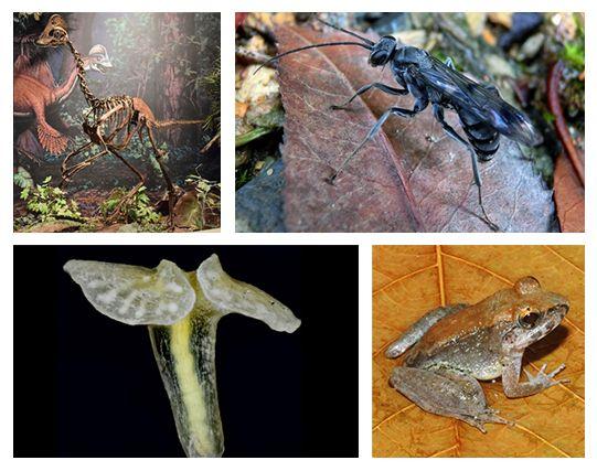 New-Species_3