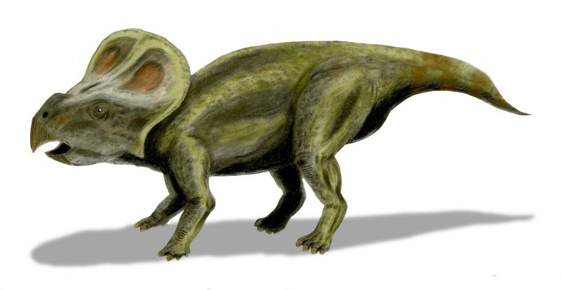 """Protoceratops BW"" by Nobu Tamura (http://spinops.blogspot.com) - Own work. Licensed under CC BY 2.5 via Wikimedia Commons - http://commons.wikimedia.org/wiki/File:Protoceratops_BW.jpg#/media/File:Protoceratops_BW.jpg"