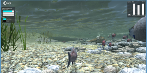 View of the first-person upstream migration of the Russian River in the Salmon Sim