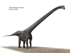 Slide 4_Mamenchisaurus_youngi_steveoc_86 (1)