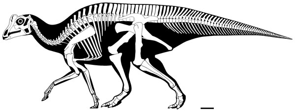 Reconstructed skeleton of a baby <i>Parasaurolophus</i>, by Scott Hartman. From Farke et al. 2013, CC-BY.