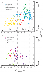 Figure 2 from Montanari et al. 2013. This illustrates the range in plant diet in modern kangaroos, and also that the stable isotope values in the paleoenvironment indicate it may have been similar to a modern temperate or subtropical environment.