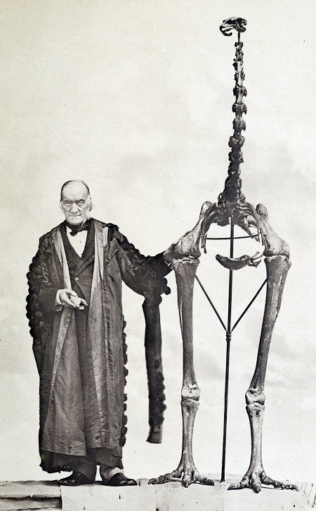 Best buddies Richard Owen and the giant moa, D. novaezealandiae. Image from Owen 1879, via Wikimedia Commons. Public domain.