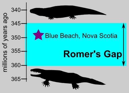 Romer's Gap is a ~15 million year interval, during which a whole bunch of tetrapod evolution presumably happened. Sites such as Blue Beach help to fill this gap. Eoherpeton at top modified from original by Nobu Tamura (CC-BY). Ichthyostega at bottom modified from public domain original by Scott Hartman.