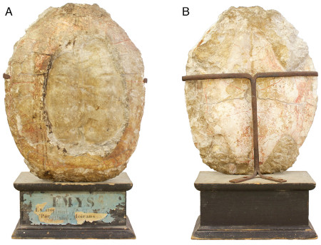Top (A) and bottom (B) views of the turtle shell.